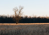 Strip of Light (John Westrock) Tags: tree nature clearsky marsh trees wisconsin midwest brookfield foxbrookpark canoneos5dmarkiii canon135mmf2lusm