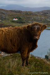 (Dylan Morrison Photography) Tags: harris scotland scottish islands isleofharris hebridies landscape scottishlandscape