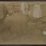Jorma Gallen-Kallela, baby rhinoceros and Mrs. Heyer. thumbnail