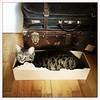 C'est la bonne taille... (woltarise) Tags: chat home montréal hipstamatic littledoglaughedstories