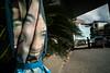 * (Sakulchai Sikitikul) Tags: street snap streetphotography songkhla sony a7s voigtlander 28mm thailand hatyai umbrella