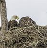 Mom And Baby (billkominsky ) Tags: naturethroughthelens