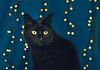 Black cat (WillemijnB) Tags: black blackcat bokeh lights christmaslights decoration felix feline chat kat katze gato blue midnight light beauty