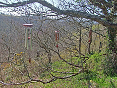 Ensemble of wind chimes hung on tree branches for recording, Teign Gorge (Philip_Goddard) Tags: europe unitedkingdom britain british britishisles greatbritain uk england southwestengland devon dartmoornationalpark drewsteignton teignvalley teigngorge windchimes trees copse valley