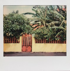 When walking in front of this house I liked the yellow, red and green colors. Lucky I had my Polaroid Spectra Pro with me. (miroir.photographie) Tags: reunionisland laréunion 974 filmphoto istillshootfilm filmisnotdead argentique analogue analog neworiginals polaroidoriginals instant spectrapro spectra polaroid