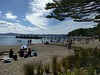 Summer Afternoon at Days Bay (Kevin Fenaughty) Tags: people outdoor beach bay days wharf tree grass sand swimming jumping umbrella eastbourne lowerhutt newzealand