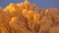 IMG_4377 (Mr Thinktank) Tags: raureif frost