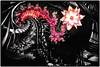 lotus (Rijba) Tags: manipulation black lotus spiral pattern shining chrome red spiritual sign zeichen abstract abstrakt
