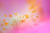 En attendant le retour des beaux jours... (Jean G68) Tags: k20d pentaxsmc125135mm fleurs