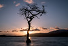 Millarochy Bay (Dom Haughton) Tags: lochlomond loch scotland millarochybay tree caledonia landscapephotography landscape outdoor water longexposure britain uk sunset evening february winter sunburst