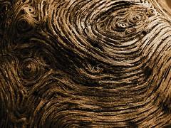 seam (aakeene) Tags: whorl abstract woodgrain organic nature plant