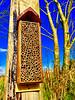 Bee Hotel (JulieK (thanks for 6 million views)) Tags: sliderssunday hss beehotel wexford ireland irish craft handmade solitarybee mason box wooden garden bluesky trees 2018onephotoeachday