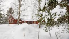 Snowfall at the cabin (evakongshavn) Tags: winter winterwonderland winterwald winterlandscape landscape landschaft paysage snow red redcabin cabin redcottage cottage