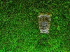 ¿Porqué Adán era tan feliz en el jardín del Edén? (FOTOS PARA PASAR EL RATO) Tags: iglesias verde plantas enredaderas esculturas valledebravoméxico naturaleza mexico