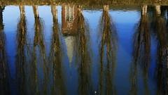 Reflets (BrigitteChanson) Tags: reflets reflections reflexos riflessi église saintmartin clocher arbres peupliers eau rivière sambre ciel tamines sambreville