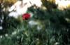 _DSF8622 (Evren Unal Photography) Tags: green leaf closeup macro fujifilm outdoor grass plant texture pattern organic text diagonal depth field foliage carlzeiss touit2850m 50mm minimalism ngc blur bokeh branchlet blossom daisy flower fieldgreen sun sunset sunlight alone artnature art nature color colors dof deep natureart minimal minimalist minimalnature minimalart mini red landscape rain black background garden photoadd sunflower