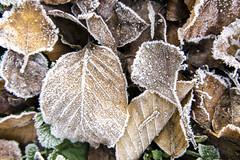 Change of Seasons (shetanchan) Tags: closeupfilter makro makrofilter winter winterwonderland frost snow ice cold forest forestlove forestview leaves