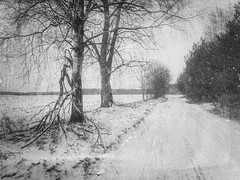 February mood (xkolba) Tags: bw blackandwhite mood podlasie february landscape winter frost tree road mobilephotography huaweip9 oldphoto