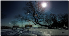 FEBRUARY 2018 NGM_7251_3893-1-222 (Nick and Karen Munroe) Tags: jackdarlingpark mississauga lakeshore lake lakefront lakeontario canada colour color colors colours nikon nickmunroe nickandkarenmunroe nature nickandkaren nikond750 d750 nick beauty beautiful beach benches bench beautifull munroedesignsphotography munroedesigns munroephotography munroe landscape karenick23 karenick karenandnickmunroe karenmunroe karenandnick karen ontario outdoors ontariocanada trees tree sun snow sunlight sky snowy water winter walk weather waterfront wintertrees nikon2470f28 nikon2470 2470f28 2470