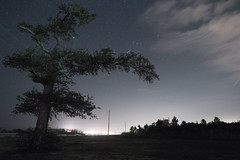 Close to midnight (rowe_rosemary) Tags: longexposure nightphotography trees mississippi travelms nature outdoors nikon coastal road night nightscape view moody grey mood