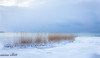 Blowin' In the Wind (maureen.elliott) Tags: landscape lakehuron grasses growing blowing blue winter nature outdoors brucecounty
