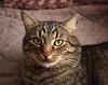 Karl (Wellandok) Tags: kass kater cat animal