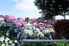 DUBAI MIRACLES GARDEN (ceebeemiranda) Tags: solsoñab cbmiranda canon1dmarkiv canon40d canon7d 50mm 1116mm restaurant 70200usm 1000400usmlseries garden landscape sharjah unitedarabemirates skyscraper dubaiairport emiratesairline street rose hotel sunset tallbuildings burnkhalifa abudhabi hiltonhotel souk beach jumeirahmadinat bridge palm souveniritems boat umbrella turkey'slamp pearl oldkettle goldkettle blueskies lamppost oldbuildings dfcdubai seagull bird marinamall fireworks airshow 46adudhabinationalday corniche picnic night day emiratespalace yacht cityscapes building fighterplane youth emirati people park saudifalconaerobaticplane f1h20grandprixchampionship2017 newyear2018 dubaicreek sea seagulls birds buildings miraclesgarden