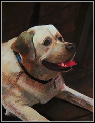 Colored Pencil Drawing Of Teddy - Drawing Done by STEVEN CHATEAUNEUF (2017) (snc145) Tags: pet labrador teddy art drawing coloredpencil acrylic mixedmedia artist artists petportrait november82017 stevenchateauneuf