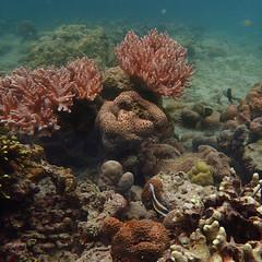 Finding Nemo (Yuris.photos) Tags: papuanewguinea ocean madang