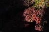 20171210-DS7_4969.jpg (d3_plus) Tags: building d700 80200mmf28d 日常 walking architecturalstructure 建築物 テレコンバーター 景色 ancientcity trekking history 紅葉 寺院 風景 temple streetphoto 寺 shintoshrine 8020028 architectural 散歩 nikond700 地形 scenery kenkoteleplusmc7af20xgx teleconverter 80200 ストリート 秋 歴史 kenkoteleplus landscape thesedays 聖地 shrine 路上 望遠 自然 holyplace sanctuary autumnfoliage japan nikon teleplus ハイキング dailyphoto 歴史的建造物 historicmonuments sightseeing トレッキング aiafzoomnikkor80200mmf28sed 80200mmf28af 80200mmf28 buddhisttemple 路上写真 fall street ニコン sky daily nature 神社 hiking telephoto 観光 80200mm autumn 空 日本 tele 古都 nikkor kenko