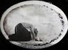 maškarní ples (bernadetta voloshyna) Tags: portrait portraitart monochrome blackandwhite bw darkart fineart fineartphotography surreal genre