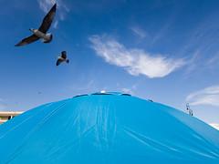 . (Riccardo Romano) Tags: fiumicino wwwriccardoromanocom umbrella ombrellone mare beach sea sky cielo nuvole cloud seagull gabbiano gabbiani uccello uccelli