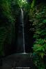 _DSC4515 (UdeshiG) Tags: bali indonesia asia waterfalls uluwatu seminyak tanahlot nikon ubud kuta paddy dogs balidogs travel traveltheworld