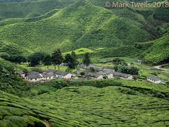 Village in the tea (Mark Twells) Tags: tanahrata pahang malaysia my tea cameron plantation