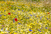 Countryside Wildflower Meadow (SLHPhotography1990) Tags: spring wild flower meadow isle wight british english nature natural colour burst vivid season country countryside rural landscape beauty scene scenic walk many lots native flowers stacked