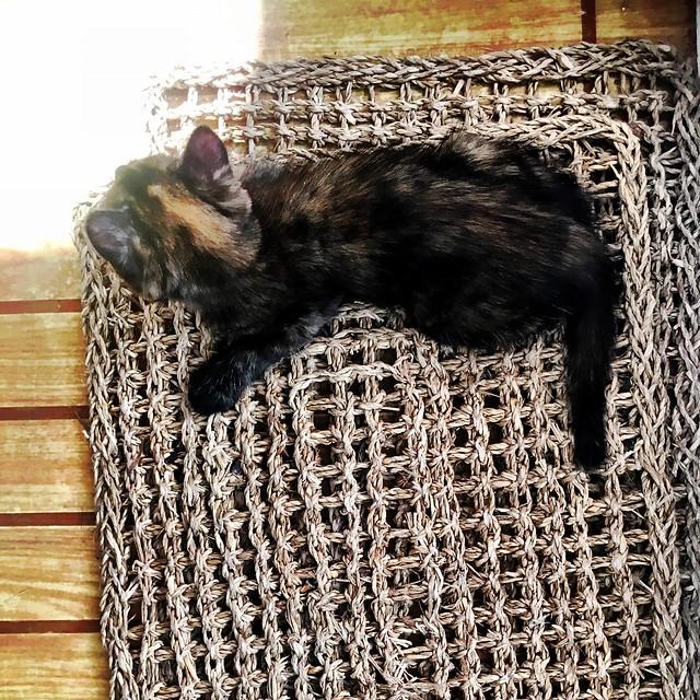 Boat Cat Sat On The Mat