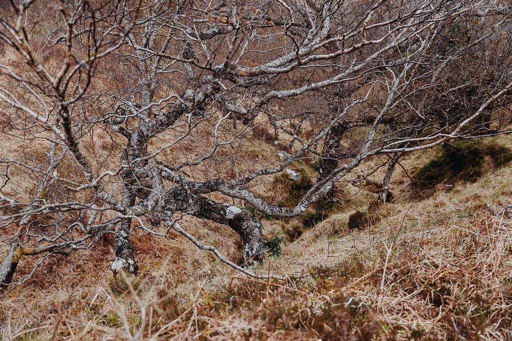 341 - Szkocja - ZAPAROWANA_