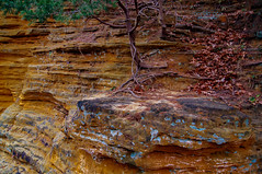 canyon slope (mariola aga) Tags: starvedrockstatepark statepark autumn park canyon rocks layers trees roots leaves landscape slope nature thegalaxy