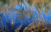 Reeds and Reflections (arbyreed) Tags: arbyreed water pond lake stream blue reflections waterreflections burrastonponds monautah juabcountyutah waterscape