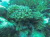 Acropora & Tridacna (Peter_069) Tags: tauchen diving scuba malediven maldives äqypten egypt wasser water underwater unterwasser padi fische fisch fish shellfish muscheln moräne moränen moraine batfish fledermausfisch koralle korallen coral nemo clownfisch clownfish boot boat vessel blaueswasser bluewater