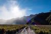 sunny path (www.carbonat380.de) Tags: fz1000 indonesia landscape leica bromo travelphotography vulcano blendenstern