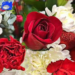 """Roses and... HD Video (EDWW (day_dae) Esteemedhelga) Tags: roses garden nature season flower splants bloom botany nursery parks blossom perennial annual bud cluster floret efflorescence seedling biennial greenery bouquet posy rosette natura mothernature greatmotherdamenature"""" vegetation horticulture flora botanical juncture natural beauty creation siring passion sprout esteemedhelga edww daydae valentinesday valentine"""
