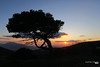 Sunset from Mt. Pentelikon on a winter's day... (Κώστας Καϊσίδης) Tags: sunset winter mtpentelikon penteli athens attica greece scenery scene sky clouds sun tree nature outdoor