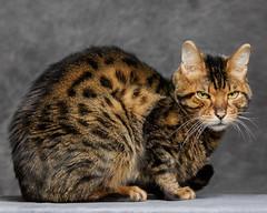 MAK_14549_ME-2018 (MzMare) Tags: cats cat pet kitten kitty kittens pets animal animals furry