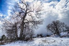 Winter Trees (gabi-h) Tags: trees barebranches againstthesky wellingtonbeach gabih princeedwardcounty winter clouds blue sky snow sand tiretracks