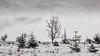 High Fens 06 (L I C H T B I L D E R) Tags: belgium winter tree trees stamm trunk belgien baraque michel hohesvenn highfens eupen malmedy hautesfagnes wood forest snow wald holz baum schnee moor bog swamp heide marsh fen himmel landschaft feld gras baraquemichel bedeckt park