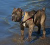 Interesting Breed (Scott 97006) Tags: dog cute canine animal water wet river shore beach