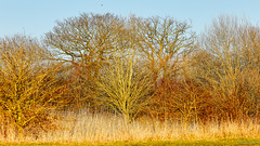 Marsh Lane Nature Reserve 25th February 2018 (boddle (Steve Hart)) Tags: stevestevenhartcoventryunitedkingdomcanon5d4 marsh lane nature reserve 25th february 2018 hamptoninarden england unitedkingdom gb steve hart boddle steven bruce wyke road wyken coventry united kingdon great britain canon 5d mk4 100400mm is usm ii wild wilds wildlife life natural bird birds flowers flower fungii fungus insect insects spiders butterfly moth butterflies moths creepy crawley winter spring summer autumn seasons sunset weather sun sky cloud clouds panoramic landscape