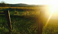 ~ Country Sunshine ...... (~ Cindy~) Tags: field grass mountains sunglare sun rays woodenfence barbwire hff 2017 cove cades