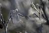 WabiSabi Serie - Kalt (LENS.ART Photographie) Tags: wabisabi d7200 nikon nah natur macro unscharf gegenlicht norddeutschland